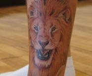 Lions tattoos on legs