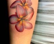 Plumerias tattoos