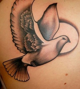 Flying Dove Shoulder Tattoo Tattoomagz