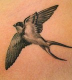 The Love And Loyalty Of Swallow Tattoos Tattoo Articles Ratta