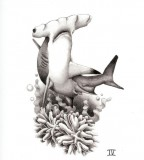 Glamorous Picture Of Hammerhead Shark Tattoo