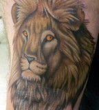 Lion Tattoo Designs For Girls