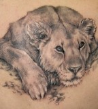 Resting Lion Tattoo Designs - Animal Tattoos