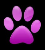 Cat Paw Print Tattoos Videos On Popscreen