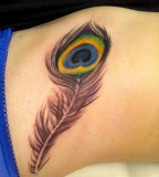 Cute Peacock Feather Tattoos Meaning