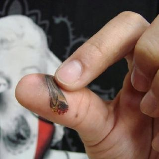 roach tattoo