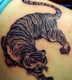Shoulder blade tattoos men tiger tattoos on right shoulder blade