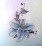 Stargazer Lily Tattoo Image Sketch