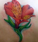 Stargazer Lily Tattoo On Back Tattoos And Tattoo Design