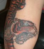 awesome tiger tattoo designs for women. Black Bedroom Furniture Sets. Home Design Ideas
