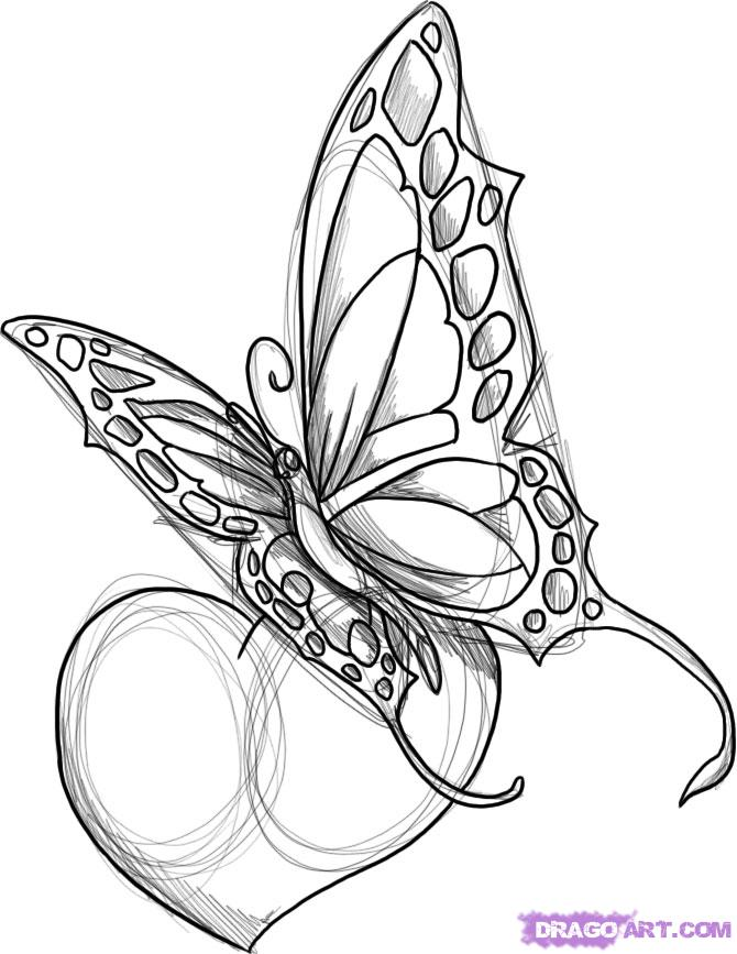 Tribal Butterfly Tattoo Drawing Sample Tattoomagz