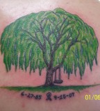 Green Weeping Willow Tree Tattoo Photos