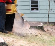 All You Need To Know About Stump Removal