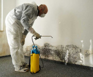 Importance Of Mold Inspection And Testing Services