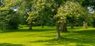 Importance of Trees and Why We Should Plant More Saplings?