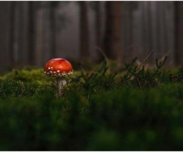 Reasons Why Men Should Take Pine Pollen