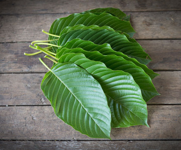 What do You need to Know About Kratom?