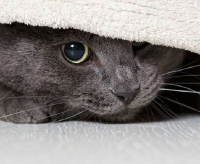 5 Things to Learn About The Hiding Behaviour in Cats