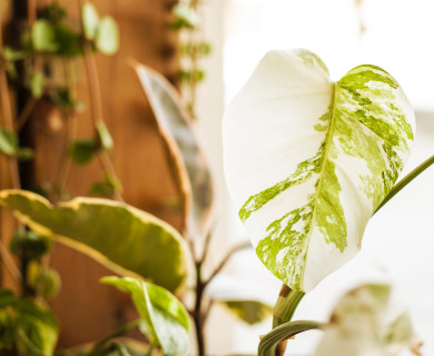 Make your home eco-friendly and healthy: Check out the tips