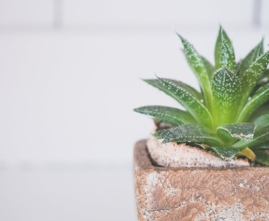 Top 6 Aloe Vera Benefits and How the Gel Improves Health