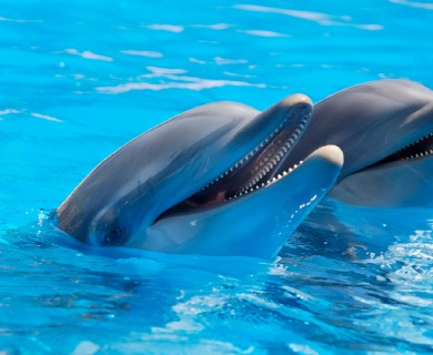 Unknown Dolphin Facts That Make Them Fascinating