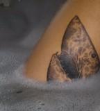 Shark-Head