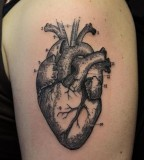 anatomical tattoo  heart etching