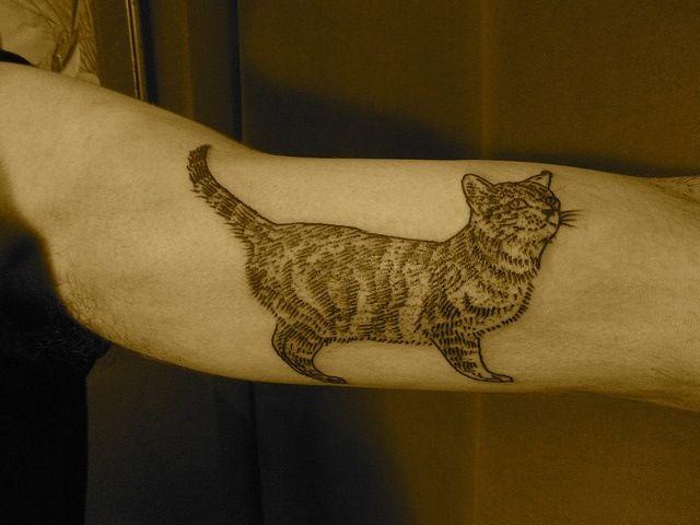 tabby cat tattoo on inside arm