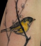 Amaizing bird tattoo
