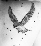 Birds and stars tattoo