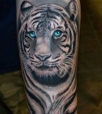 Blue eyes tiger tattoo