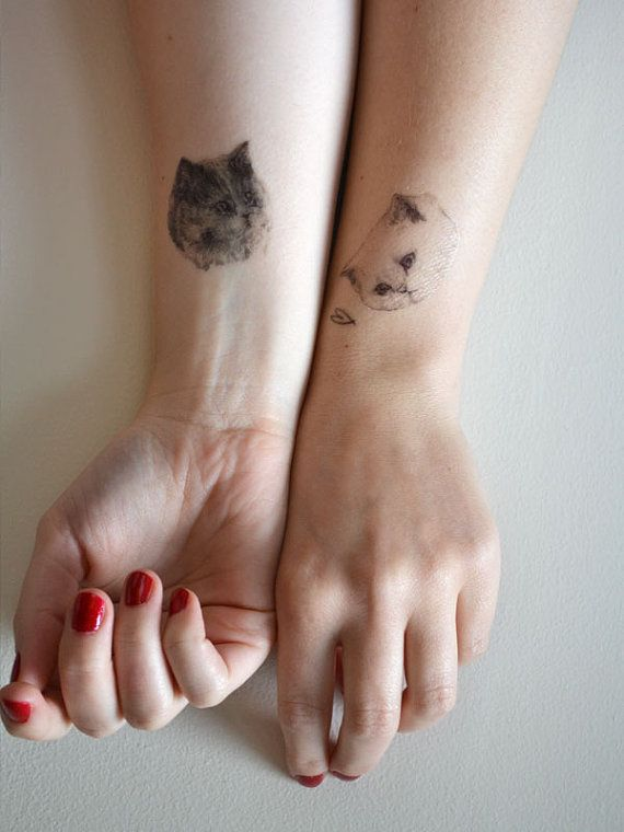 Cats tattoo
