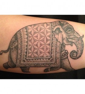 Elephant tattoo by Miah Waska