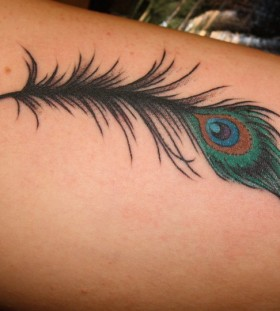 Feather tattoo by Mike Schweigert
