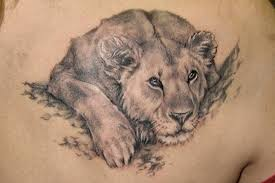 Wonderful young lion tattoo