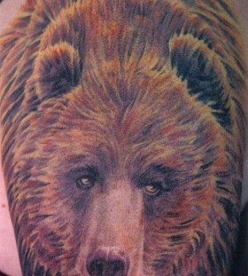 cute colorful bear