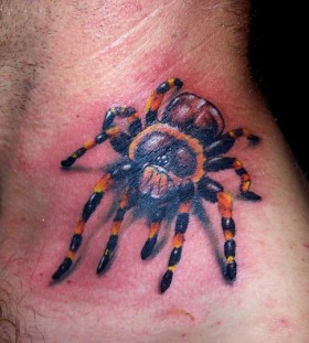 danger spider