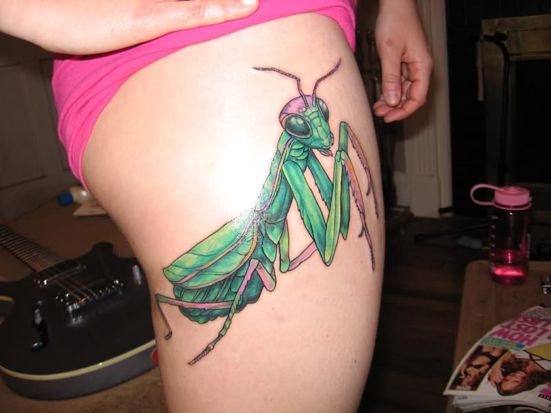 Arachnids tattoos