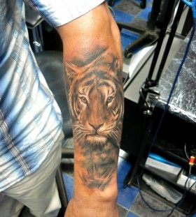 Amaizing tiger tattoo by Adam Kremer