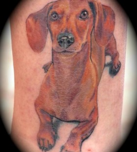 Brown long dog tattoo on leg