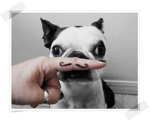 Cool dog tattoo on finger