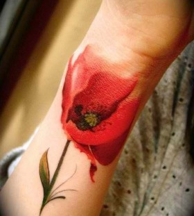 Red lovely poppy tattoo on arm