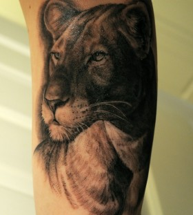 Serious lovely lion tattoo on leg