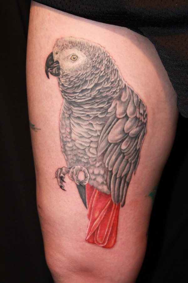 African grey parrot leg tattoo