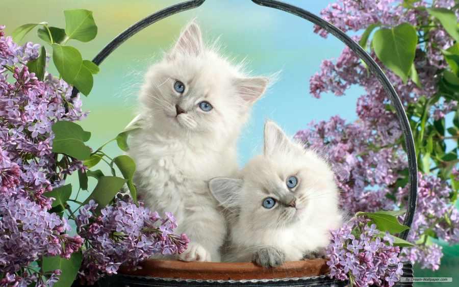 Cats 1440x900 Wallpaper