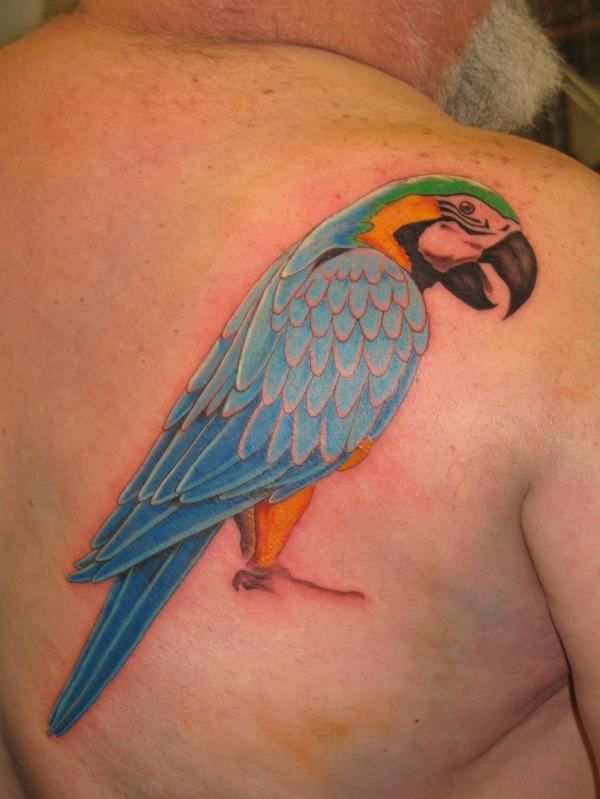 Colourful parrot back tattoo