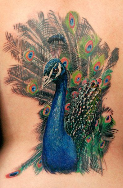 Peacock tattoo by Phil Garcia
