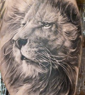 Realistic lion tattoo by Elvin Yong