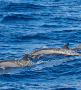 Dolphins together