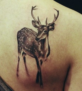 Sweet deer tattoo by David Allen